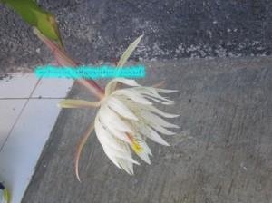 Jam 07:00, Bungaku Layu
