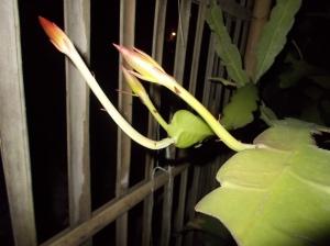 Bakal Bunga